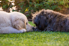 Заботя собака Стоковые Фото