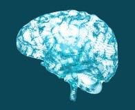 Заболевания мозга вырожденческие, ` s Parkinson, ` s Alzheimer, иллюстрация штока