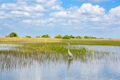 Заболоченное место Флориды, езда Airboat на национальном парке болотистых низменностей в США Стоковая Фотография RF
