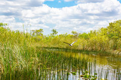Заболоченное место Флориды, езда Airboat на национальном парке болотистых низменностей в США Стоковая Фотография