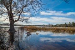 Заболоченные места Аризоны и животный заповедник riparian стоковое фото rf