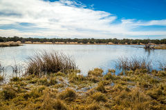 Заболоченные места Аризоны и животный заповедник riparian стоковое изображение