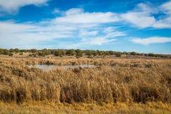 Заболоченные места Аризоны и животный заповедник riparian стоковое изображение rf
