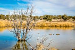 Заболоченные места Аризоны и животный заповедник riparian стоковое фото