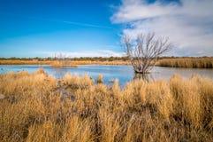 Заболоченные места Аризоны и животный заповедник riparian стоковая фотография rf