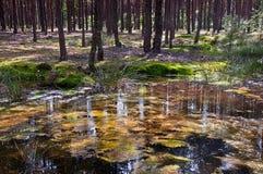 Заболоченные места леса Стоковые Фото