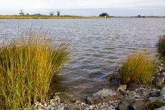 Заболоченный рукав реки Lafourche, Луизиана стоковые изображения
