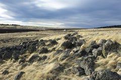 заброшенная земля Стоковые Фотографии RF
