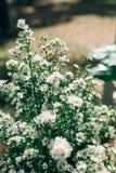 Забудьте меня не цветок на горе Стоковое Фото