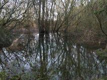Забытый пруд леса Стоковое Изображение RF