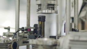 Завалка бутылок оливкового масла в разливая по бутылкам фабрике сток-видео
