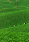 завальцовка поля зеленая стоковые изображения rf