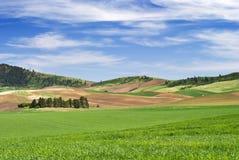 завальцовка сельскохозяйствення угодье Стоковое Изображение