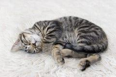 завитый котенок вверх Стоковое Фото