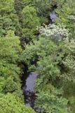 Завихрения и поворот реки через первоначально лес Стоковое Изображение