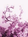 завихряться цветка Стоковое фото RF