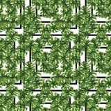Завода джунглей лета печати ладонь экзотического тропическая выходит Картина, безшовный флористический вектор на черное белое гео Стоковые Изображения RF