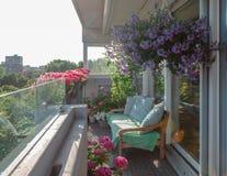 Заводы балкона, красивые различные покрашенные цветки, голубое небо стоковые фото
