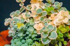 Заводы бонзаев суккулентные на шоу бонзаев садов Frederik Meijer стоковые изображения rf