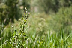 Заводы ветви в природе Стоковые Фото