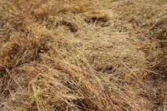 Заводы высушенных хлопьев на земле! стоковое фото