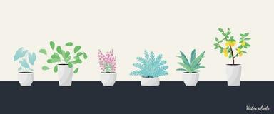 Заводы в баке Aslenium, Salvia Officinalis, Coleus, Caladium, папоротники и цветок дерева лимона r бесплатная иллюстрация