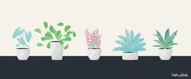 Заводы в баке Aslenium, Salvia Officinalis, Coleus, Caladium, папоротники цветет r бесплатная иллюстрация
