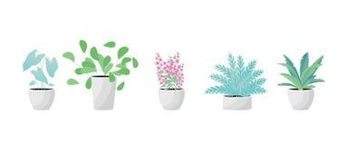 Заводы в баке Aslenium, Salvia Officinalis, Coleus, Caladium, папоротники цветет r иллюстрация штока