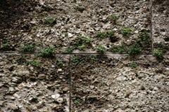 Заводы в отказах стены Стоковые Фотографии RF