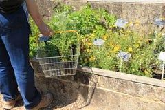 Заводы для продажи в больших доме & садах Dixter в лете Стоковое фото RF