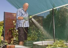 Заводы жизнерадостного садовника моча Стоковые Изображения RF