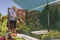 Заводы жизнерадостного садовника моча Стоковое Изображение