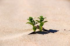Заводы зеленой травы на желтых песках крупных планов пляжа стоковые фото