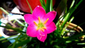 Заводы земли природы цветеня цветков розовые стоковое изображение