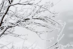 Заводы и снег Стоковое Изображение RF