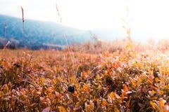 Заводы и трава стоковые фотографии rf