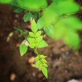 Заводы и тяжелое дыхание с зеленым цветом Стоковое Изображение RF