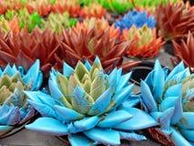 Заводы кактуса с красочной краской стоковое фото rf