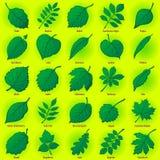 заводы листьев установили иллюстрация вектора