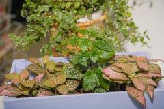 Заводы окна Дома стойки цветков на силле окна Стоковая Фотография RF