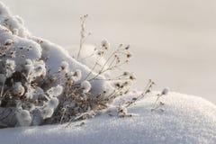 Заводы покрыты с заморозком и снегом Солнце светит ярко стоковое фото