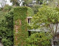 Заводы растут на здании в академии Jao Tsung i стоковая фотография rf