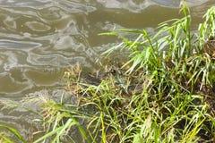 Заводы растя на болоте Стоковое фото RF