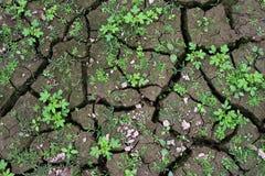 Заводы растя на великолепной почве Стоковые Фотографии RF