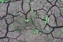 Заводы растя на великолепной почве Стоковое Фото