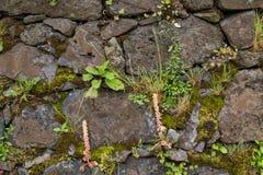 Заводы растя среди камней стоковое изображение rf