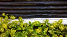Заводы сада с деревянной предпосылкой стены стоковое изображение rf