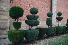 Заводы сада с формами шарика на предпосылке кирпичной стены стоковые фотографии rf