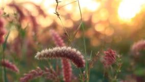 Заводы травы фонтана сток-видео