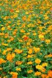 заводы цветков стоковое изображение